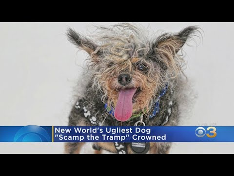 The Rick Lewis Show - 'Scamp The Tramp' 2019 Ugliest Dog