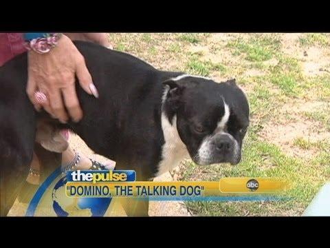 Barking Dog Says 'I Love You'
