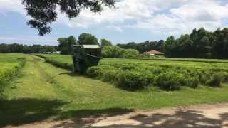 Charleston Tea Plantation Harvestor