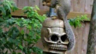 Clay Wood Fired Squirrel Feeder Ii