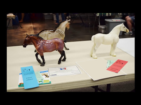 ASAF Model Horse Show Placings and Photos ~ 2015