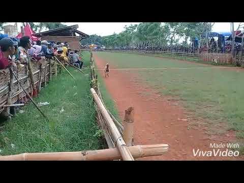 Kerapan kambing piala DPRD CUP 2018 TERBANG TANPA SAYAP