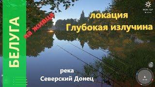 Русская рыбалка 4 река Северский Донец Белуга и другие рыбки
