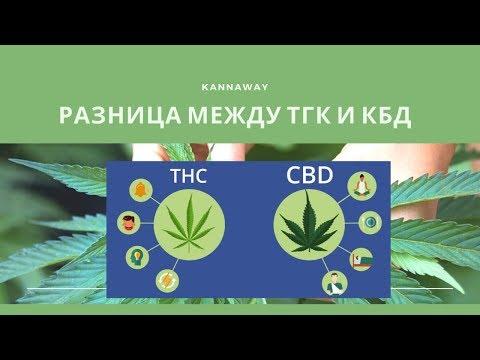 РАЗНИЦА МЕЖДУ ТГК и КБД  ОСОБЕННОСТИ КБД