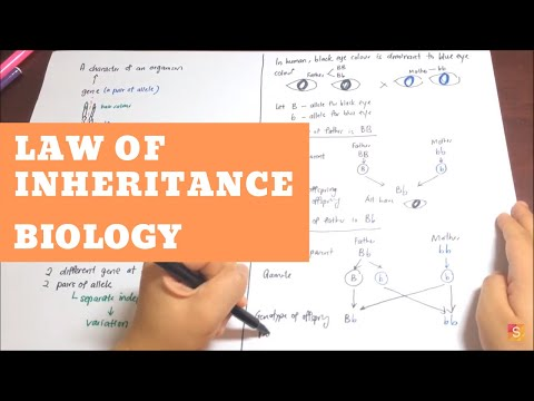 Biology- Law of Inheritance