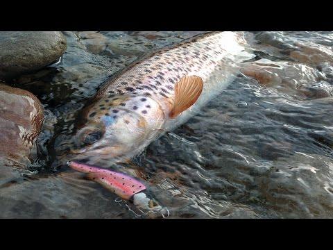 особенности ловли форели в горных реках