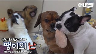which-one-of-the-two-dogs-is-the-genius-ep2