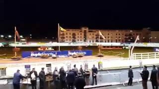 Course de levriers - Dublin octobre 2015 - ALLEZ L'ORANGE !