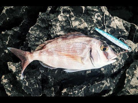 Shore jigging. Red porgy (Pagrus pagrus). 20.09.2016.