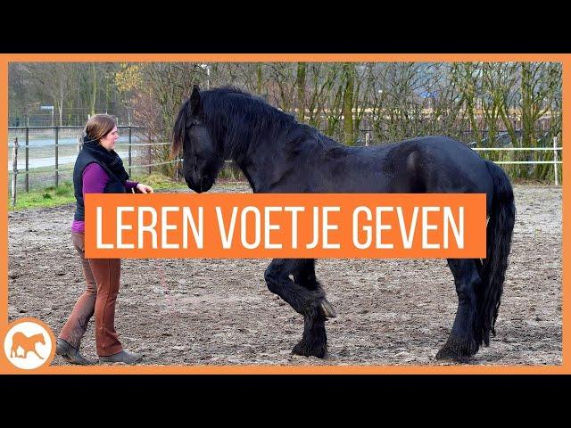 Tutorial: Leer je paard makkelijk voetje geven.