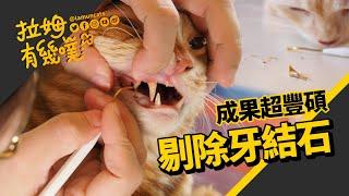 沒想到我們居然成功幫大家剃掉牙結石! 終於可以不用再去挨麻醉了̋(๑˃́...