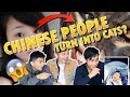 WEIRDEST VIRAL CHINESE TIK TOK DANCE CHALLENGE  (THIS IS ABOUT CATS?)