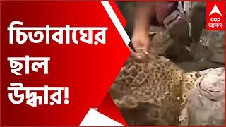 Kolkata: মুচিপাড়া থানা এলাকায় রাস্তা থেকে উদ্ধার চিতাবাঘের ছাল! | Bangla News