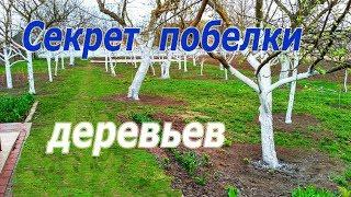 видео побелка деревьев