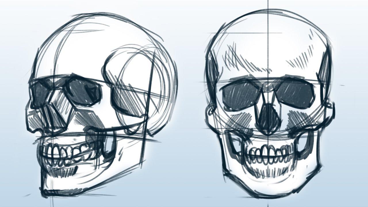 Tudo Sobre Crânios Tutorial De Desenho