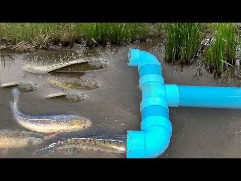 Thumbnail: Smart Girl Make PVC Pipe Fish Trap To Catch A Lot Of Fish - Khmer Fishing At Siem Reap