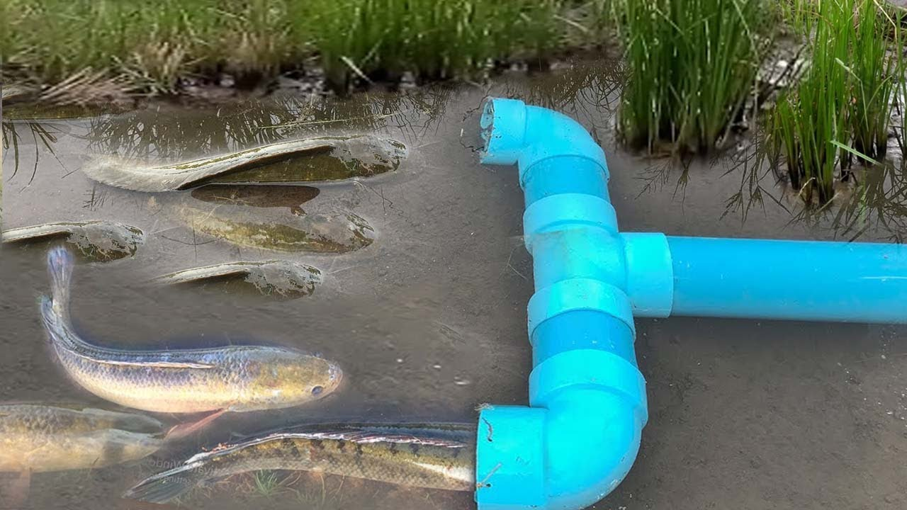 Smart girl make pvc pipe fish trap to catch a lot of fish for Lot of fish