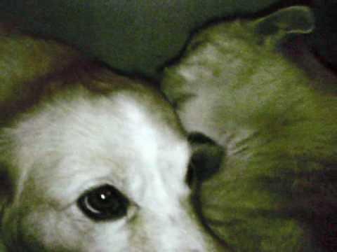 CANE E GATTO (cat and dog)