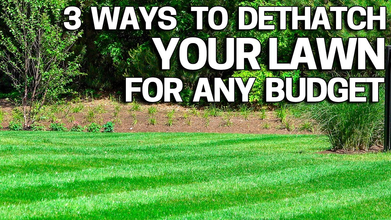 Improve Your Lawn With Dethatching 3 Ways How To Do It For Any