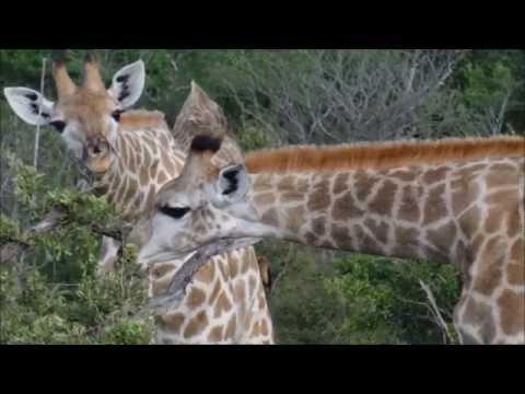 Bram verzorgt dieren als vrijwilliger in Zimbabwe