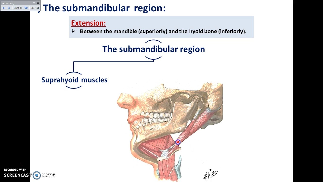 Overview Of Head Exterior Pre Auricular And Sub Mandibular Regions