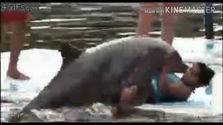 Brutal and funny attacks of animals on human, from monkey to lions.