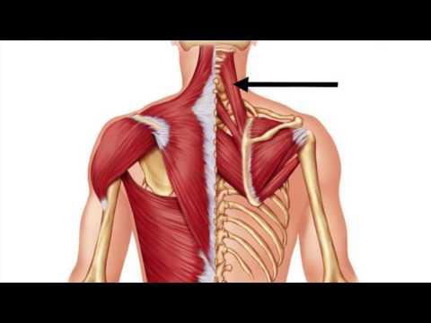 Myofascial Release (Self Massage) -  Levator Scapulae