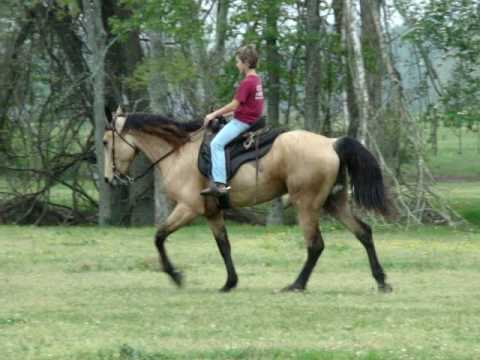 Tennessee Walking Horse Shoes For Sale