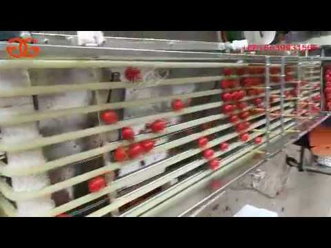 Tomato Grading Machine Video