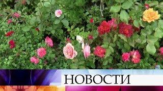 ВМоскве проходит вкусный ияркий фестиваль— «Московское лето. Цветочный джем».
