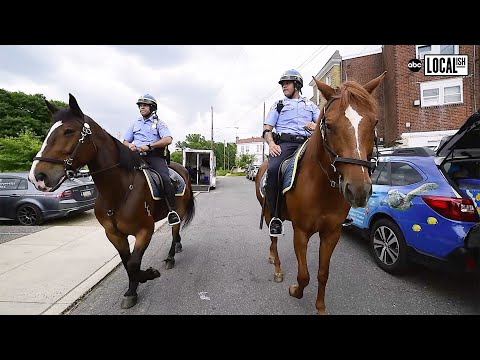 How Police Horses are Trained with the Philadelphia Mounted Police | Localish