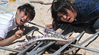 【超危険】「猛毒ウミヘビ」を捕まえて食べてみた!!【無人島生活二日目】#3