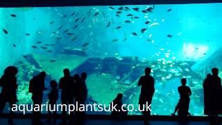 Large Aquarium Aquatic Fish And Plant Life Under The Sea Views, Sea Life Creatures