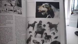 A glorious examination of the origin of hound breeds, their functio...