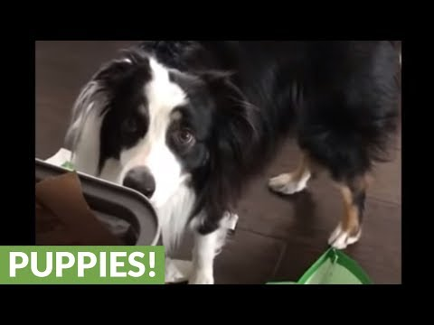 Tidy dogs help owner clean up the trash