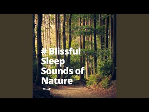 Sleep & Sleep Sounds of the Nature - Nature Explorer mp3 letöltés