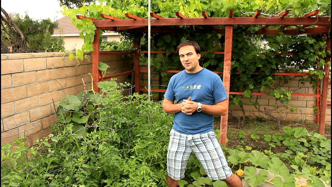 Attrayant Easy Tomato Shake Pollination With California Gardener