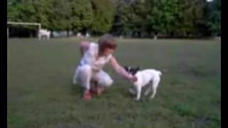 Уроки дрессировки собаки- начинаем с  трюков -  барьер.