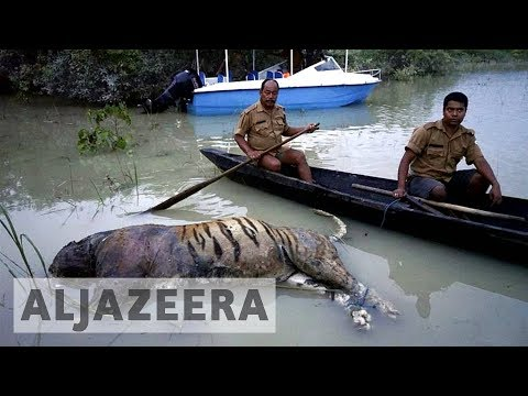 India hit hardest by deadly regional floods