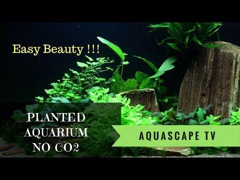 125L Planted Aquarium for Beginners without CO2 | Aquascape TV
