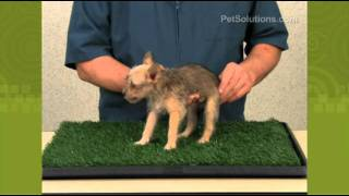 Petsolutions: Dog Pet Park Indoor Potty
