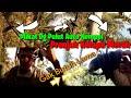 Mikat Burung Prenjak Kepala Merah Mantap Dalam  Menit Auto Nempel Pulut Prenjak Asli Bengkulu  Mp3 - Mp4 Download