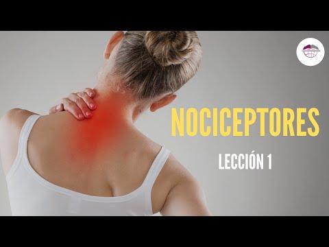 FISIOLOGÍA DEL DOLOR. NOCICEPTORES - YouTube