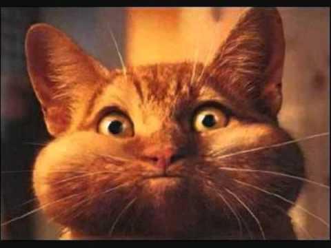 gatos tontos y graciosos muy chistosos