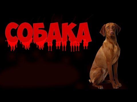 Страшные Истории от Freddy - Собака
