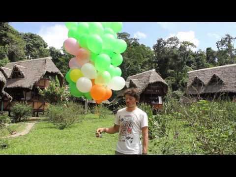 crees Rainforest Journalist Aerial Photo Blog Video