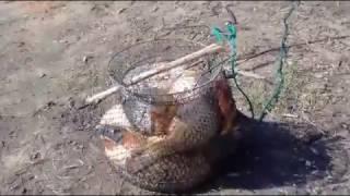 Рыбалка на платнике под г. Чехов