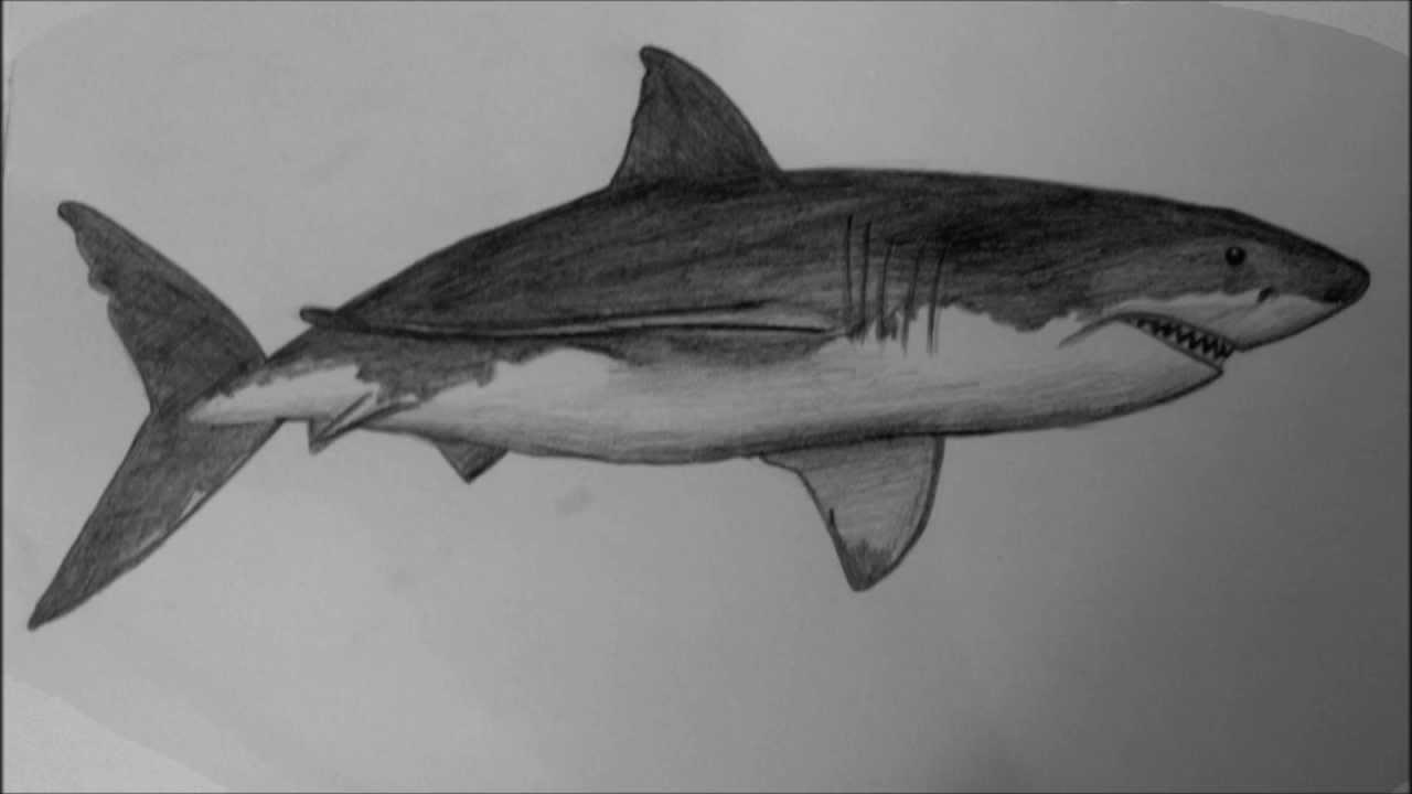 how to draw a white shark hd youtube