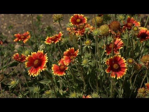 Prairie Yard & Garden: Native American Garden