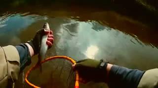 Ловля хариуса тенкарой на мушку на маленькой речке • 2 • Рыбалка в Подмосковье